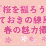 【3/30開催】桜を撮ろう!春の魅力撮影会開催