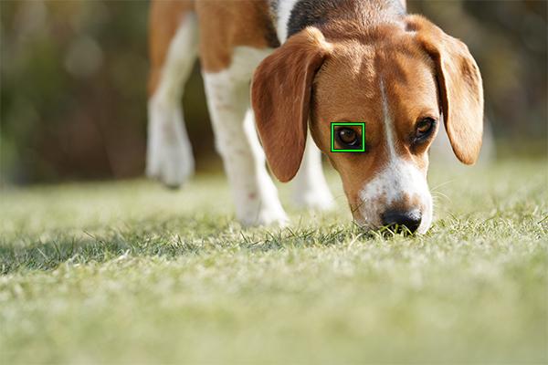 α7III/α7RIIIの待望のアップデートが登場!リアルタイム瞳AFのバージョンアップ、動物瞳AFの追加、インターバル撮影、ワイヤレスリモート機器への対応など