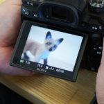 【実験】動物瞳AFはリアルな動物フィギュアに対してどれだけ瞳AFしてくれるのか?!